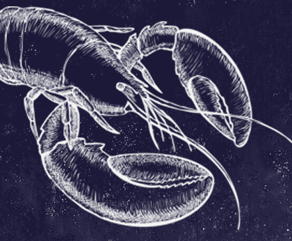 Chalk sketch of a lobster in whit on a textured, blue background